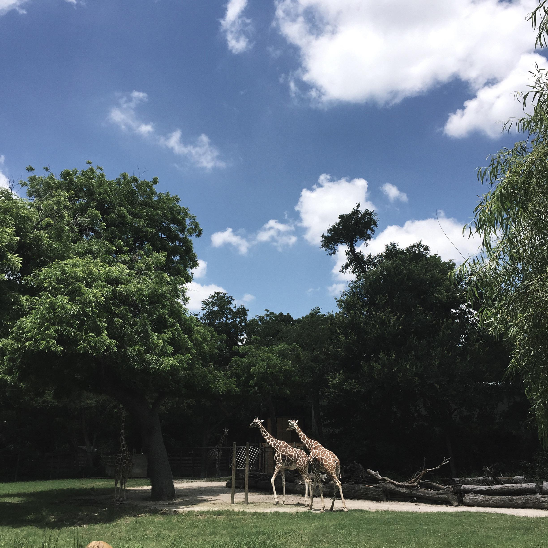 Forth Worth Texas Zoo