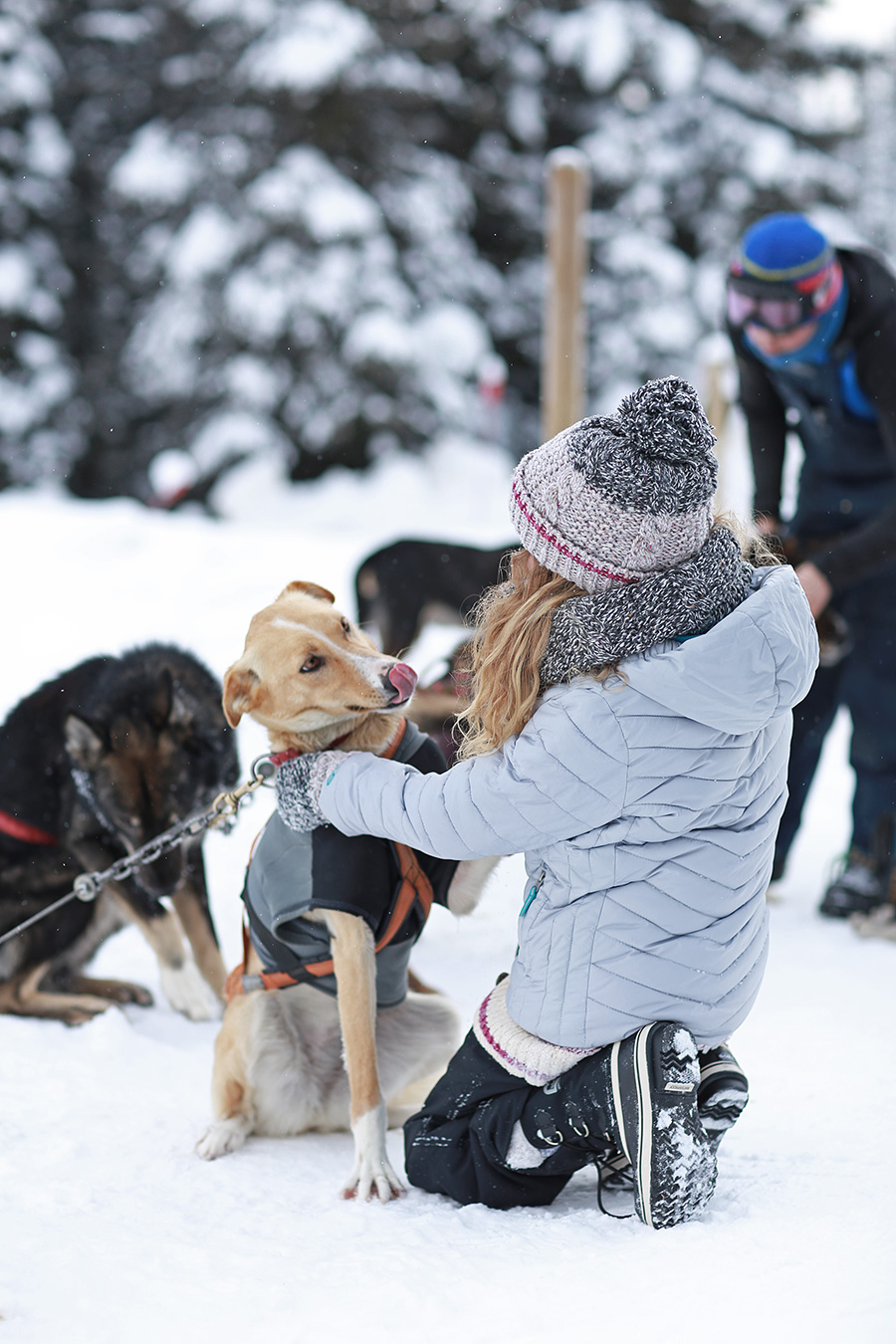 Dog Sled Tours Winter