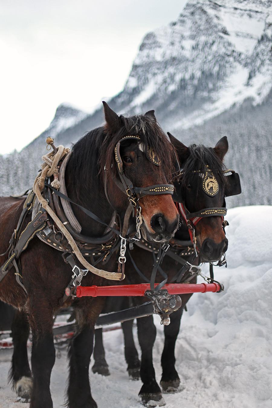 Sleigh Ride Alberta Canada