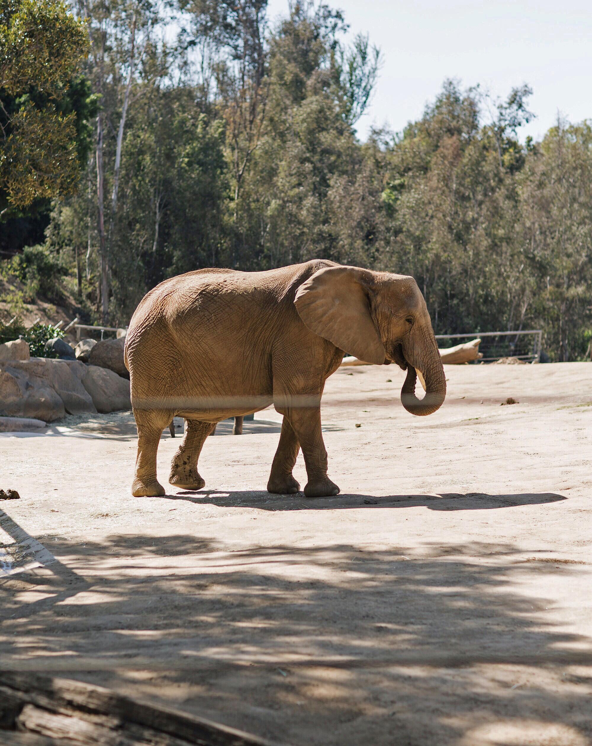 Elephant Safari Park San Diego