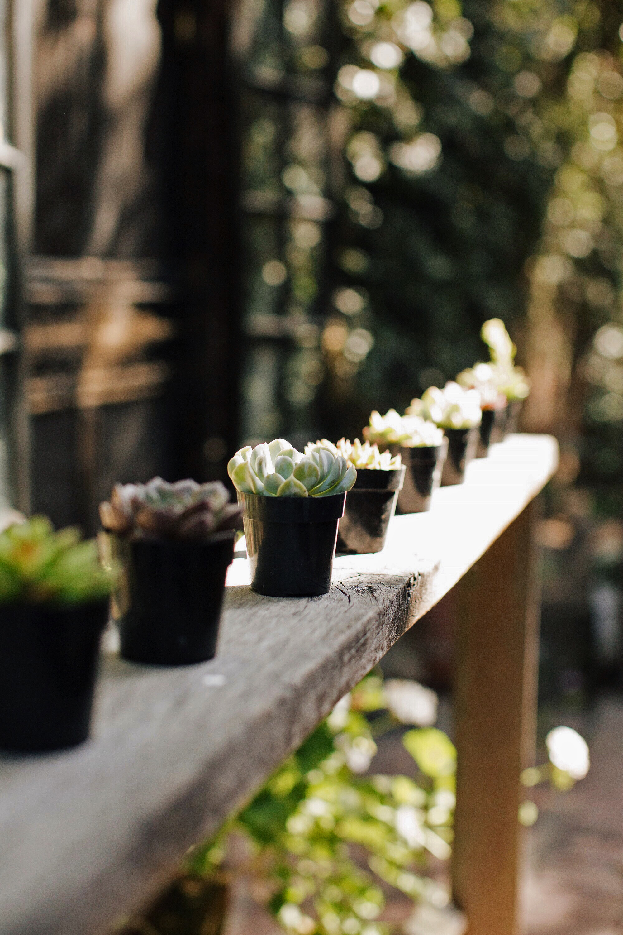 Succulent Party Favors